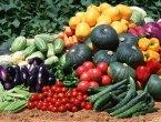 Продажа овощной рассады