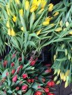 Тюльпаны для букетов