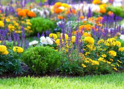Рассада цветов оптом