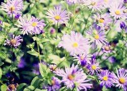 Продажа цветочной рассады