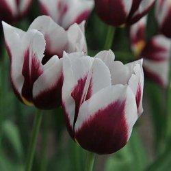 Букет тюльпанов онлайн
